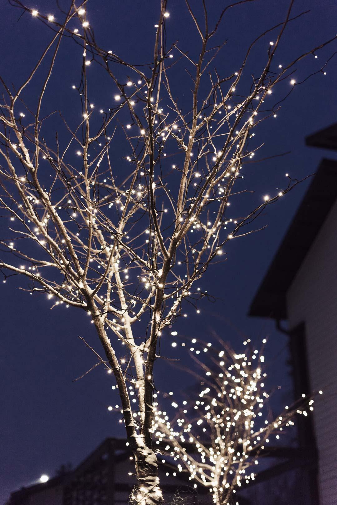 Valoköynnös puissa